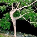 balet-tree