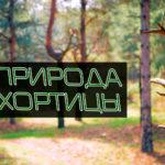 4K — Природа Хортицы — видеокартина для спокойствия